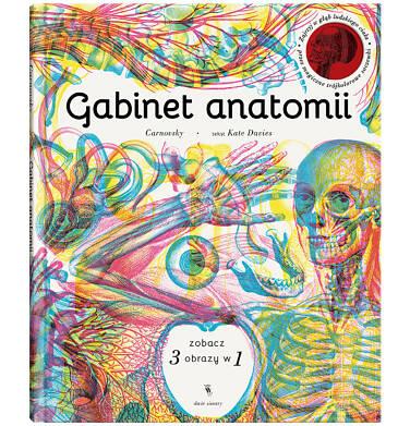 Endo - Gabinet anatomii BK04045_1 106